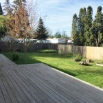 large back yard with mature fruit trees